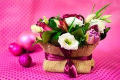 vita tulpan för blomma för bakgrundssammansättningsconvolvulus Royaltyfria Bilder