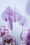 vita tulpan för blomma för bakgrundssammansättningsconvolvulus arkivfoto