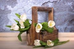 Vita tulpan i en trätrug Royaltyfri Foto