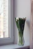 Vita tulpan i en vas Royaltyfri Bild
