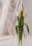 Vita tulpan i minimalistic Royaltyfri Bild