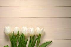 Vita tulpan på en ljus träbakgrund Royaltyfri Foto