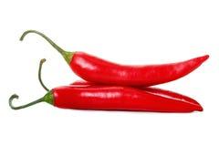 vita varma isolerade peppar för chili Royaltyfria Bilder
