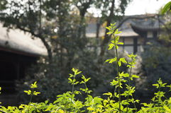 Vita verde Immagine Stock