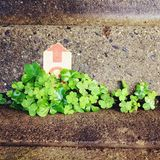 Vita verde Fotografie Stock