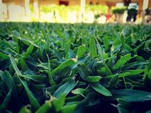 Vita verde Fotografia Stock