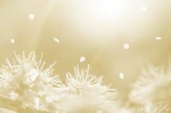 Vita vårblommor och kronblad på orange bakgrundsabstrakt begrepp Royaltyfri Bild