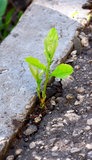 Vital Forces. The young sprout makes the way through city asphalt Stock Image