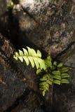Vitalità della pianta, speranza Fotografia Stock