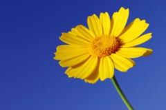 Vitality. Yellow sharp flower against blue sky stock photo