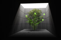 Vitality concept. Tree growing in the darkness. Hi-res digitally generated image Royalty Free Stock Image