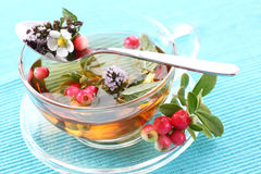 Vitality cranberry tea Royalty Free Stock Image