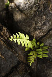 Vitality of plant, hope. Green plant grow in the cracks, vitality of plant, hope Stock Photo