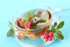 Vitality tea Stock Images
