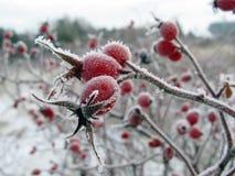 Vitamin auf Kälte stockbilder