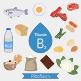 Vitamin B2 or Riboflavin infographic Royalty Free Stock Images