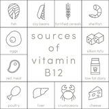 Vitamin B12. Sources of vitamin B12,  outline food icons for infographic Royalty Free Stock Image