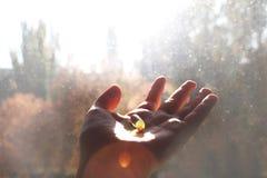 Vitamin D eller omega 3 kapslar Vitaminet stelnar i hand mot fönstret Begreppet av en brist av vitamin D i kroppen arkivbilder