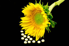 Vitamin D And Sunflower Royalty Free Stock Photos