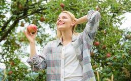 vitamin och bantamat fruktträdgård trädgårdsmästareflicka i äppleträdgård Lycklig kvinna som äter Apple sunda tänder hunger royaltyfri fotografi