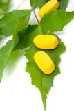 Vitamin pills over green leaves Royalty Free Stock Photos