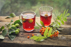 Vitamin tea with red mountain ash and green wounds Royalty Free Stock Photos