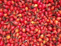 Vitamina da floresta Imagem de Stock