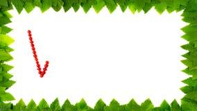 Vitaminas Bagas do corinto vermelho no quadro das folhas 4K param a animação do movimento video estoque