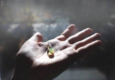 Vitamine D ou Omega 3 capsules Gel de vitamine à disposition contre la fenêtre Le concept d'un manque de vitamine D dans le corps images libres de droits