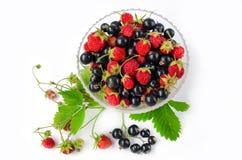 Vitamine di estate - ribes nero e fragola di bosco in una tazza di vetro circondata dalle foglie e dai mazzi Isolato Vista superi immagine stock