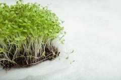 Vitamine micro- greens voor gewichtsverlies, ontgifting en middel tegen oxidatie De ruimte van het exemplaar stock foto