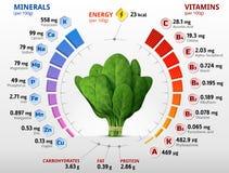 Vitaminen en mineralen van spinaziebladeren Royalty-vrije Stock Afbeeldingen