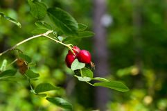 Vitamines d'automne Photo libre de droits