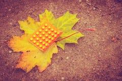 Vitamins c for autumn. Medication, health concept. Vitamins for autumn on maple leaf Stock Photos