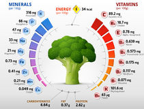 Vitamins and minerals of broccoli flower head. Infographics about nutrients in broccoli cabbage. Qualitative vector illustration about broccoli, vitamins Royalty Free Stock Images