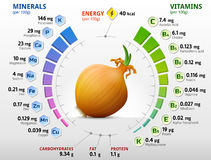 Vitamins and minerals of common onion. Infographics about nutrients in shallot bulb. Qualitative vector illustration about onion, vitamins, vegetables, health Stock Image