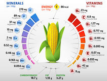 Vitamins and minerals of corn cob Royalty Free Stock Photography