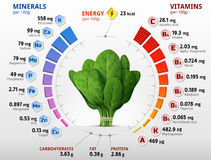 Vitamins and minerals of spinach leaves Royalty Free Stock Images