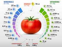 Vitamins and minerals of tomato. Infographics about nutrients in tomato. Qualitative vector illustration about tomato, vitamins, vegetables, health food Stock Images