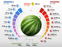 Vitamins and minerals of watermelon fruit. Infographics about nutrients in raw melon. Qualitative vector illustration for watermelon, vitamins, fruits Royalty Free Stock Image