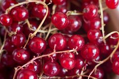 Vitamins. Summer berries. Red currant background. Close up, selective focus. Harvest Concept stock photos