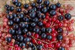 Vitamins. Summer berries. Red currant background. Close up, selective focus. Harvest Concept. Vitamins. Summer berries. Mix of Red, black, rose currant stock photo