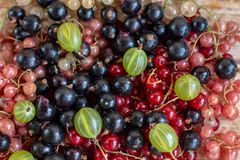 Vitamins. Summer berries. Red currant background. Close up, selective focus. Harvest Concept stock images
