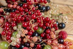 Vitamins. Summer berries. Red currant background. Close up, selective focus. Harvest Concept. Vitamins. Summer berries. Mix of ripe organic Red, black, rose royalty free stock photography