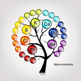 Vitamins tree concept for your design Stock Images