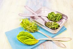 Vitamins - various herbs on spoons Stock Images