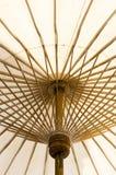 Vitbokparaply royaltyfri bild