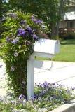 Vite del Clematis su un alberino della cassetta postale Fotografie Stock Libere da Diritti