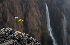 Vite di fioritura e sbiadire le cadute fotografia stock libera da diritti