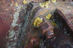 Vite e bullone arrugginiti con il lichene immagine stock